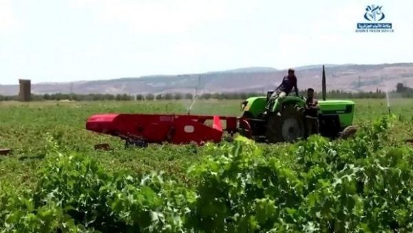 Batna: décollage agricole et pari sur l'investissement pour un développement global